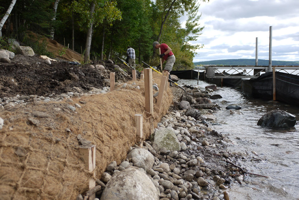 Shoreline - coir installation