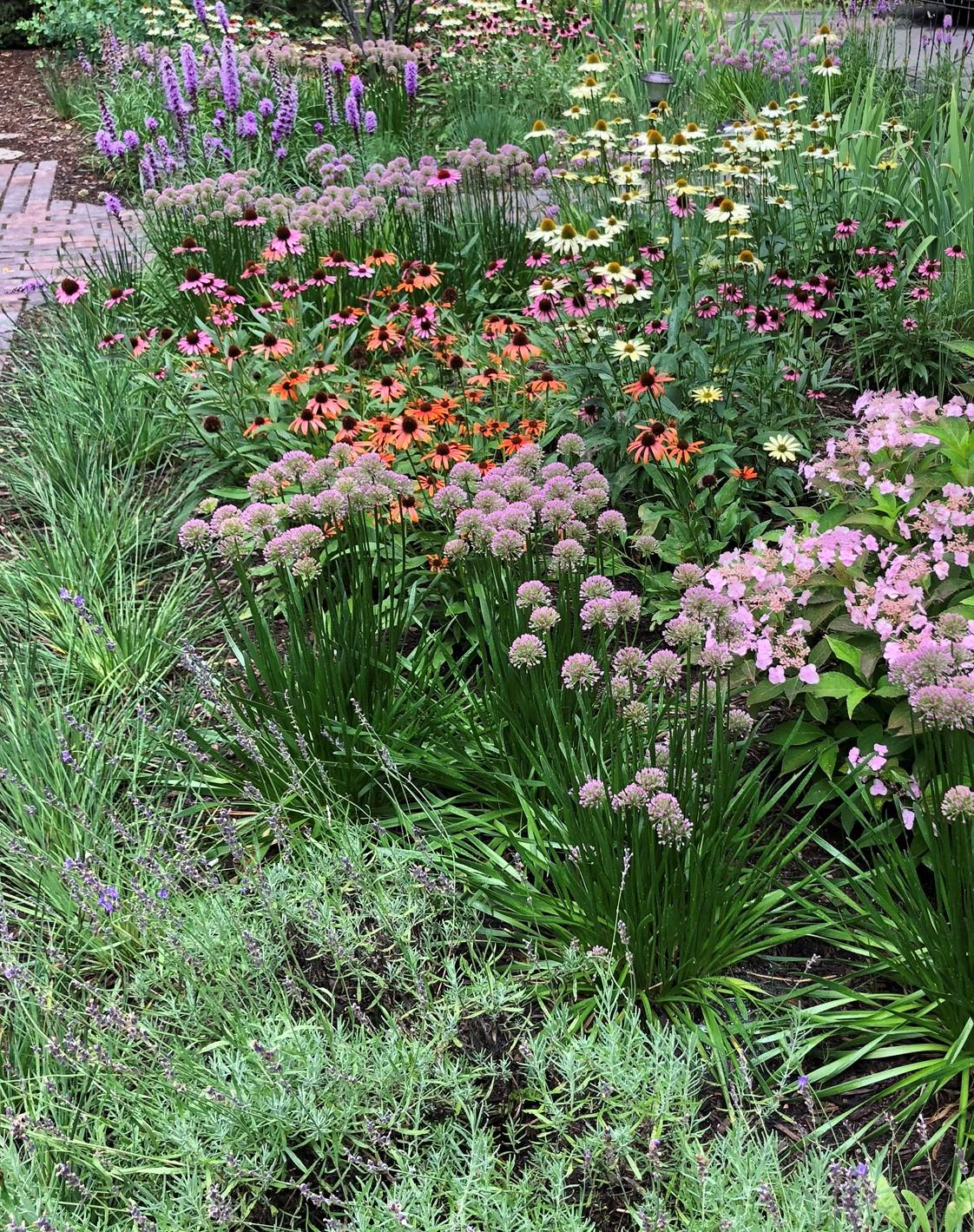 Landscape Perennials
